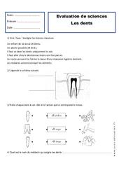 Dents – Examen Evaluation : 2eme Primaire