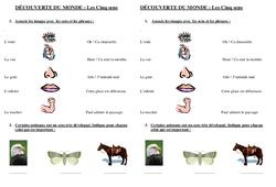 5 sens – Examen Evaluation : 2eme Primaire