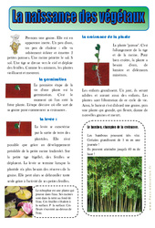 Naissance des végétaux – Les végétaux – Lecture documentaire – Découverte du monde : 2eme Primaire