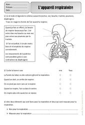 Appareil respiratoire – Respiration – Exercices – Découverte du monde : 2eme Primaire