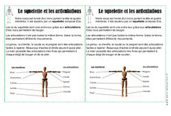 Squelette – Articulations – Corps Humain – Cours, Leçon : 2eme Primaire