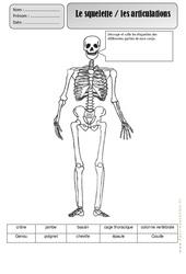 Squelette – Corps Humain – Exercices – Découverte du monde : 2eme Primaire
