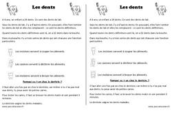 Dents – Trace écrite – Découverte du monde – Cours, Leçon : 1ere Primaire