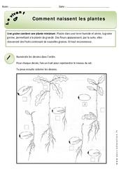 Comment naissent les plantes – Exercices – Découverte du monde : 1ere Primaire