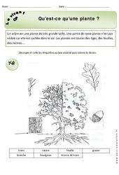 Qu'est ce qu'une plante – Exercices – Découverte du monde : 1ere Primaire