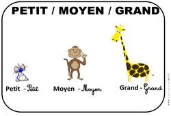 Petit – Moyen – Grand – Affichages pour la classe : 1ere, 2eme, 3eme Maternelle – Cycle Fondamental