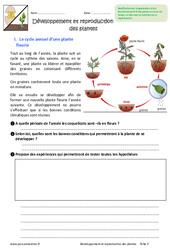 Développement et reproduction des plantes – Exercices : 6eme Primaire