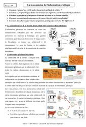 Transmission de l'information génétique – Cours – SVT : 3eme Secondaire
