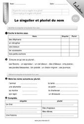 Singulier et pluriel du nom – Evaluation – Bilan – CE1