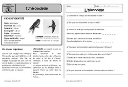 L'hirondelle – Ce1 – Lecture documentaire – Cycle 2
