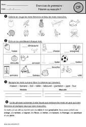 Exercices – Masculin – Féminin – Cp – Grammaire – Cycle 2