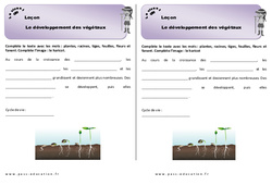 Développement des végétaux – Ce1 – Leçon