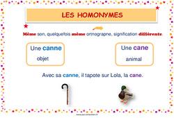 Homonymes lexicaux - Cycle 2 - Affiche de classe