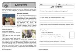 Les oursons - Ce1 - Lecture documentaire - Compréhension