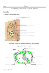 Céllule - Unité structurale du vivant - 2nde - Exercices corrigés