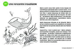 Une rencontre inoubliable – CE1 – Lecture compréhension – Histoire illustrée – Niveau 2