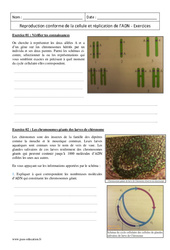 Reproduction conforme de la cellule et réplication de l'ADN – Première – Exercices corrigés