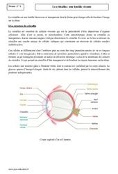 Cristallin – Lentille vivante – Première – Cours