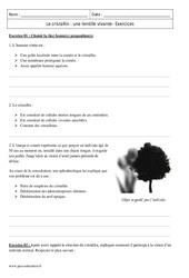 Lentille vivante – Cristallin – Première – Exercices corrigés