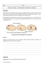 Aires cérébrales et plasticité – Cerveau et vision – Première – Exercices