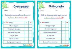 Le masculin et le féminin du nom - Ce1 - Ce2 - Rituels - Orthographe