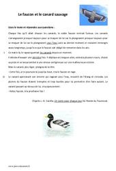 Le faucon et le canard sauvage - 6ème - Lecture - Conte