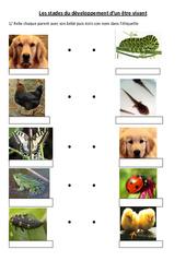 Stades du développement d'un être vivant – Exercices -  Ce2 - Cm1 – Sciences – Cycle 3
