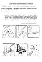 Stades du développement du papillon – Exercices -  Ce2 - Cm1 – Sciences – Cycle 3