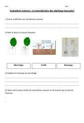 Reproduction asexuée des végétaux – Ce2 – Cm1 – Evaluation