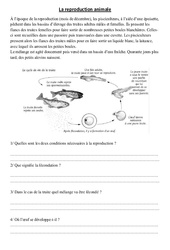 Reproduction animale – Exercices – Cm1 – Cm2 – Sciences – Cycle 3