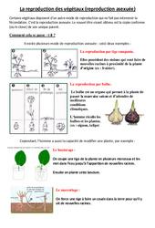 Reproduction des végétaux (asexuée) – Exercices – Ce2 – Cm1 – Sciences – Cycle 3