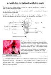 Reproduction des végétaux - Exercices - Ce2 - Cm1 - Sciences - Cycle 3
