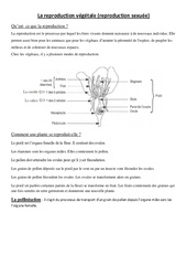 Reproduction végétale – Exercices – Ce2 – Cm1 – Sciences – Cycle 3