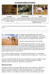 Animaux adaptés à la chaleur – Exercices –  Cm1 – Cm2 – Sciences – Cycle 3