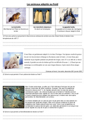 Animaux adaptés au froid – Exercices –  Cm1 – Cm2 – Sciences – Cycle 3