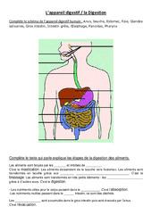 L'appareil digestif – Exercices – Ce2 – Cm1 – Sciences – Cycle 3