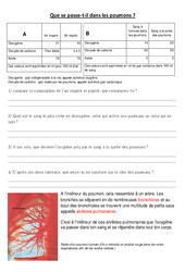 Je comprends ce qui se passe dans les poumons – Exercices – Cm1 – Cm2 – Sciences – Cycle 3