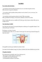 Les dents – Leçon – Ce2 – Sciences – Cycle 3