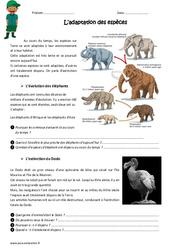 Adaptation des espèces – Cm1 – Cm2 – Exercices