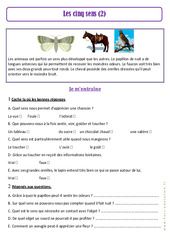Les 5 sens – Ce1 – Corps humain – Exercices (2) – Sciences – Cycle 2