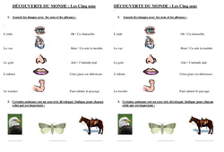 5 sens – Ce1 – Evaluation