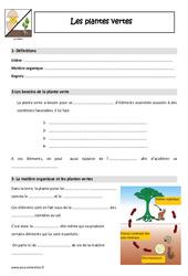 Plantes vertes – Cm1 – Cm2 – Leçon