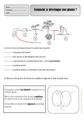 Comment se développe une plante – Ce1 – Les végétaux – Exercices – Découverte du monde – Cycle 2
