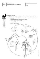 Cycle de vie d'une plante – Ce1 – Les végétaux – Exercices – Découverte du monde – Cycle 2