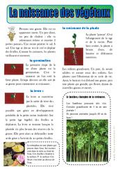 Naissance des végétaux– Ce1 – Les végétaux - Lecture documentaire – Découverte du monde – Cycle 2