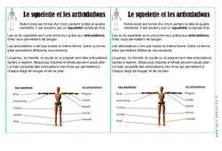 Squelette – Articulations – Ce1 – Corps Humain – Leçon