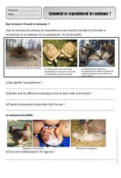Reproduction des animaux – Ce1 – Monde animal – Exercices – Découverte du monde – Cycle 2