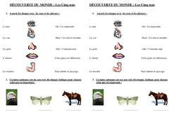 Cinq sens – Cp – Evaluation