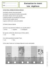 Végétaux – Cp – Evaluation