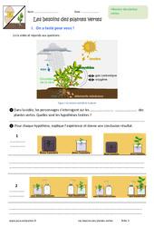 Besoins des plantes vertes - 6ème - Exercices